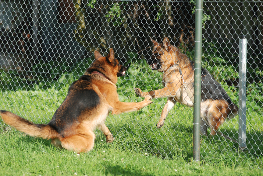 german aggression question To stop aggression in puppy, firstly, you should know the reason, why dogs become aggressive there are number of reasons that revolve around this fact your dog may feel his territory is being compromised or he feels threatened.