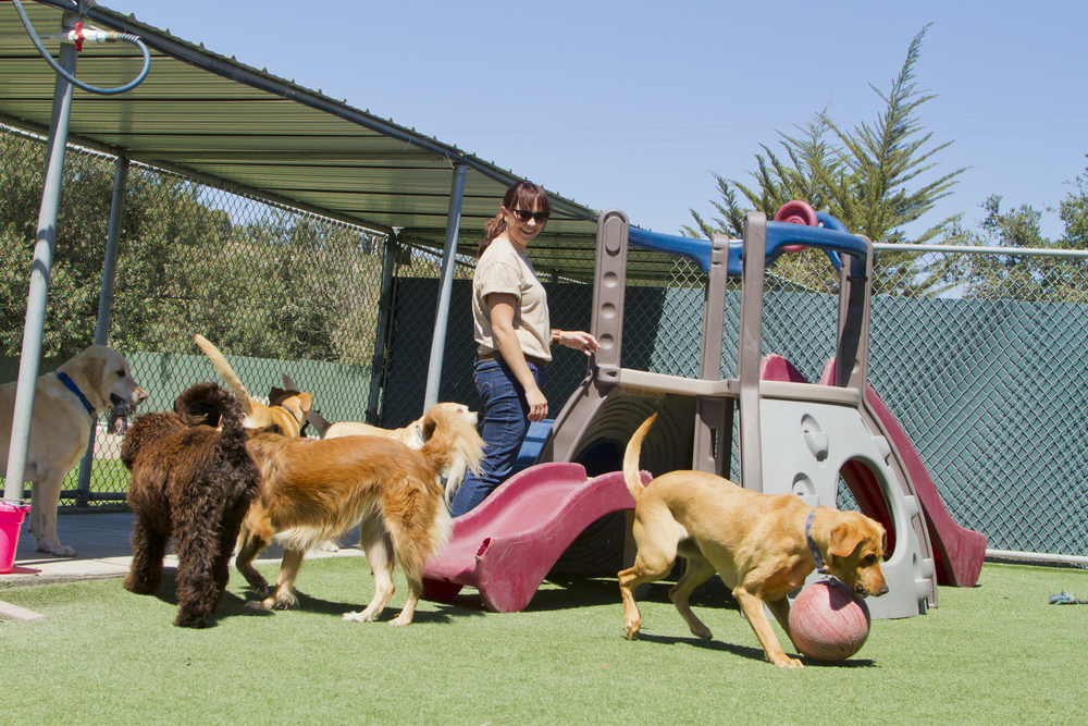 How do I find a Good Trainer, Daycare, or Kennel? | The Dog Gurus