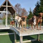 CampK9-Dog-Play-Yard-03-150x150