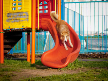 An adult dog slides down an orange slide attached to a children's play structure in a park.