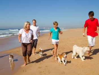 A family of four jogs with their four small dogs on the beach.