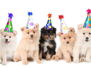 Five puppies sitting down and wearing party hats.