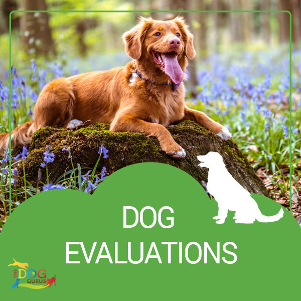 perform dog evaluations training guide