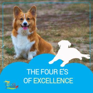 "A corgi smiling at the camera with ""The Four E's of Excellence"" written below the image."