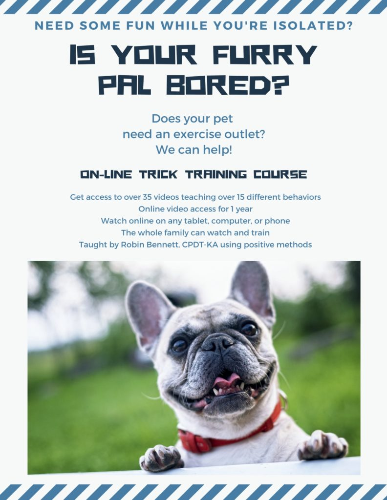 does your furry friend need exercise i can help copy 1