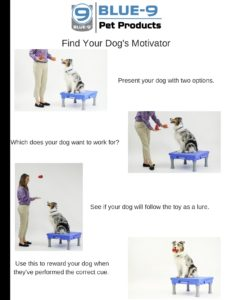 find your dogs motivator picture
