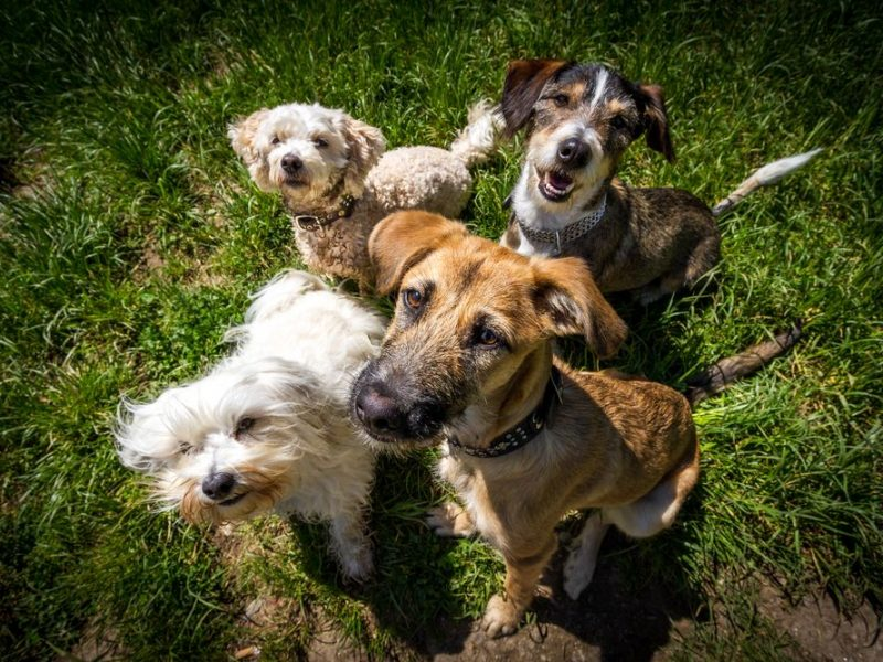 Managing Problem Behaviors in Dog Daycare