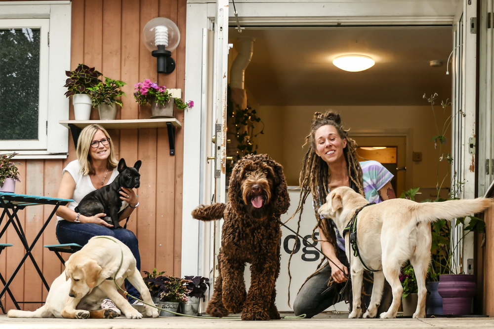 Start Your Own Pet Care Business