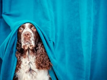 Working with fearful dogs