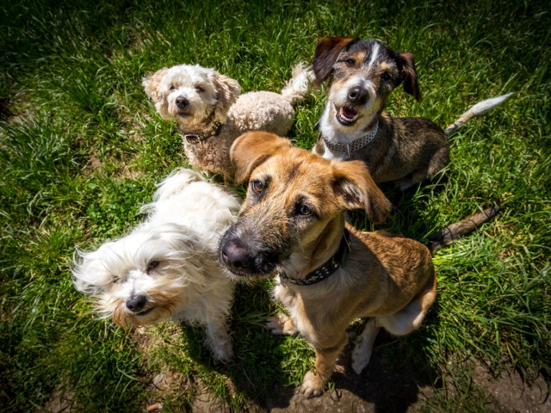Secrets to Evaluating Dogs for Your Playgroups
